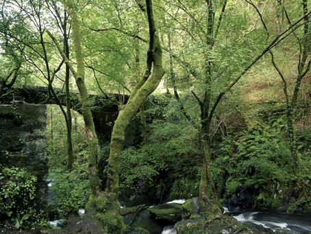 Fragas do Eume: un bosque mágico para perderse dentro y escapar de la ciudad