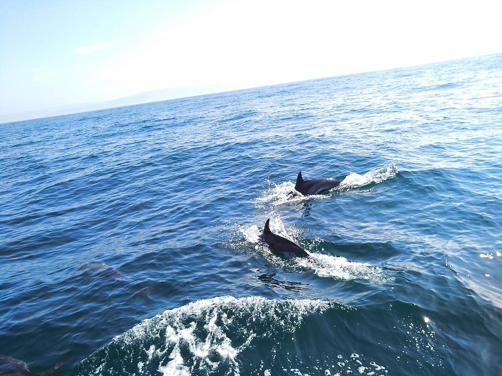 Rutas en barco por la costa gallega