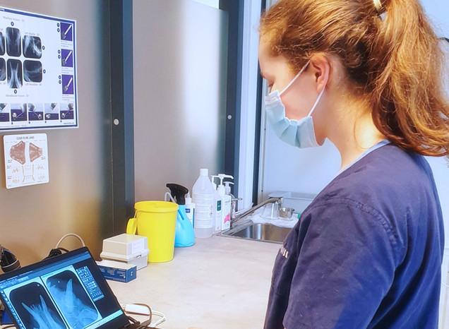 Dyrepleier Ida tar tannrøntgen