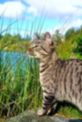 Sommer katt
