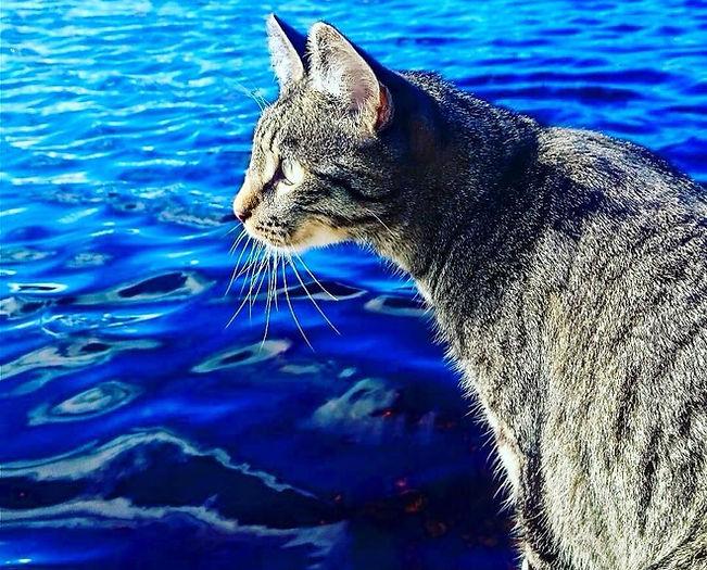 Katt ved sjøen