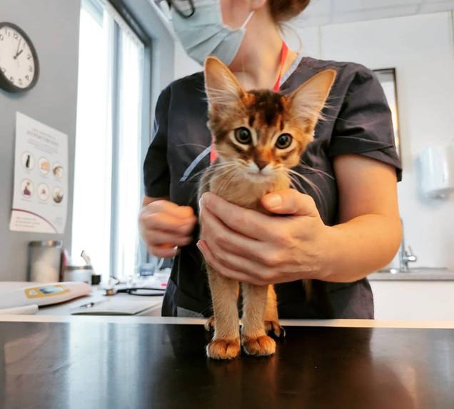 Veterinær Nina utfører helsesjekk