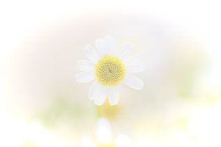 Daisy_edited_edited_edited.png