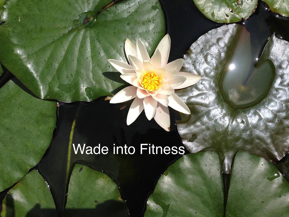 WadeintoFitness.com