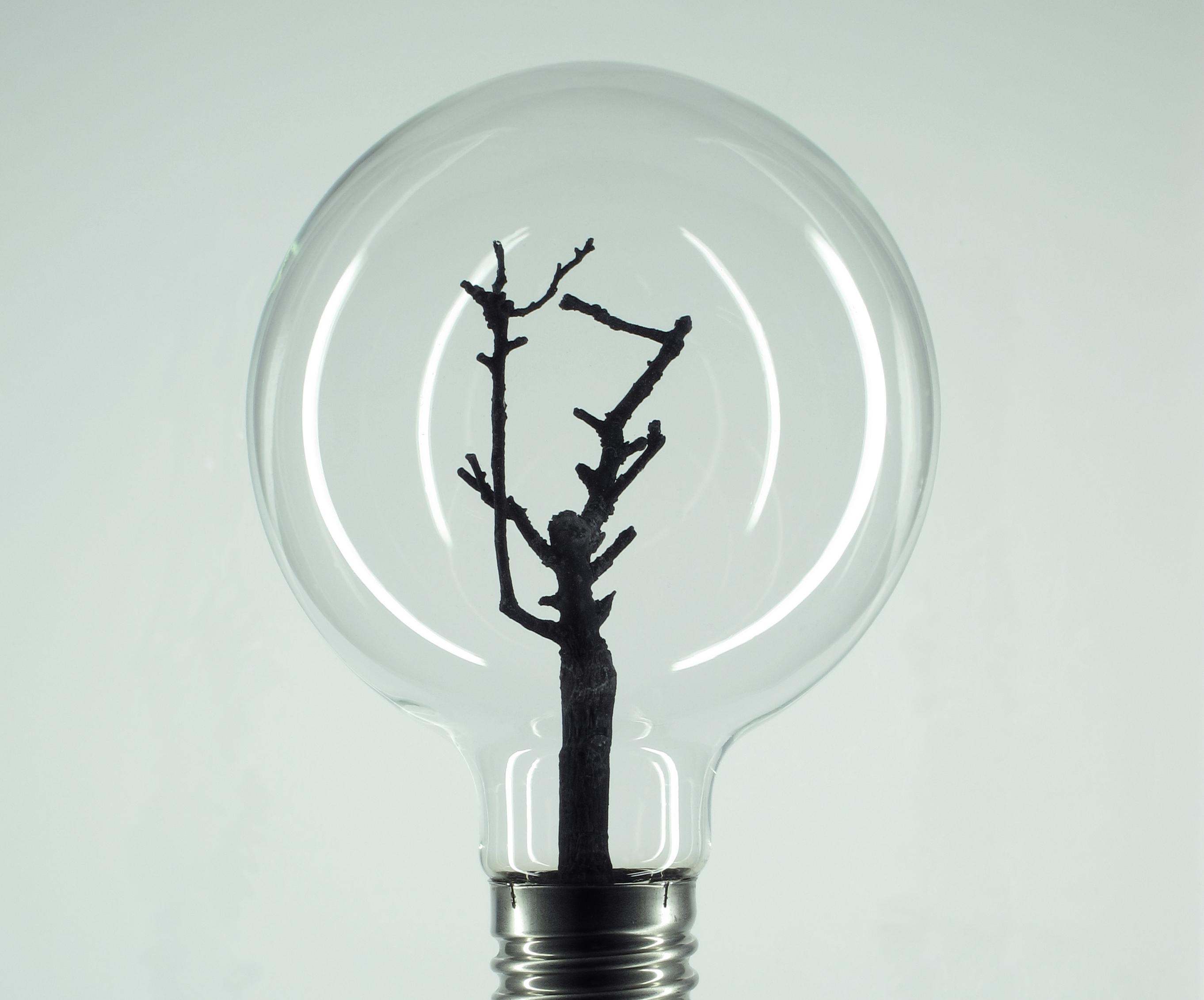 Bulb n°1
