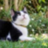 CatsCollars2016_10-400x400.jpg