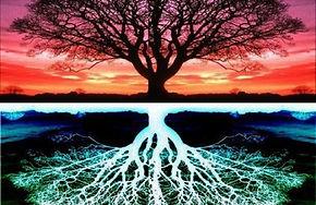 arbre et reflet.jpg