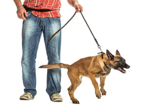 5 Ways to Help Your Reactive Dog (without leaving your home)