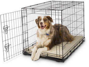 Crate Training a Puppy