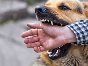 What it takes to work with Human Aggressive Dogs (and why I'm taking a break)