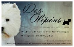 Dubos C - Carte Visite - Westie (4)