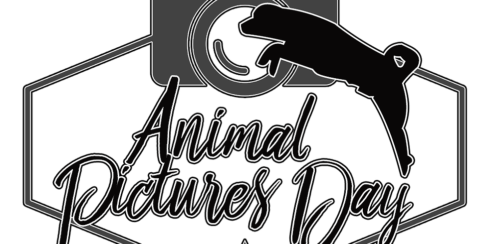 Animal Pictures Day