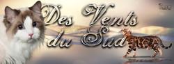 Agnès_Bengadolls_-_24h_G_-_Chat_Sacré_bi