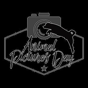 Animal Picture Day, clermont, région auvergne, AUVERGNE, rhône Alpes, Shootng, séance photo pas chère, pas cher, photo de chiens, Eloïse Baret, animaux, animal, logo d'animaux, shootin d'animaux, lc, prairie, studio photo