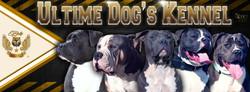 JoAuré_-_24H_G_-_Ultime_Dog's_Bully_Kenn