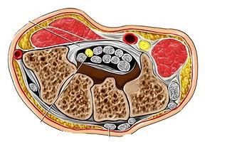 CTS anatomie.jpg