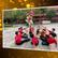 恭喜!本院於第一屆國際武術文化視頻大賽獲得最佳視頻獎:優秀獎
