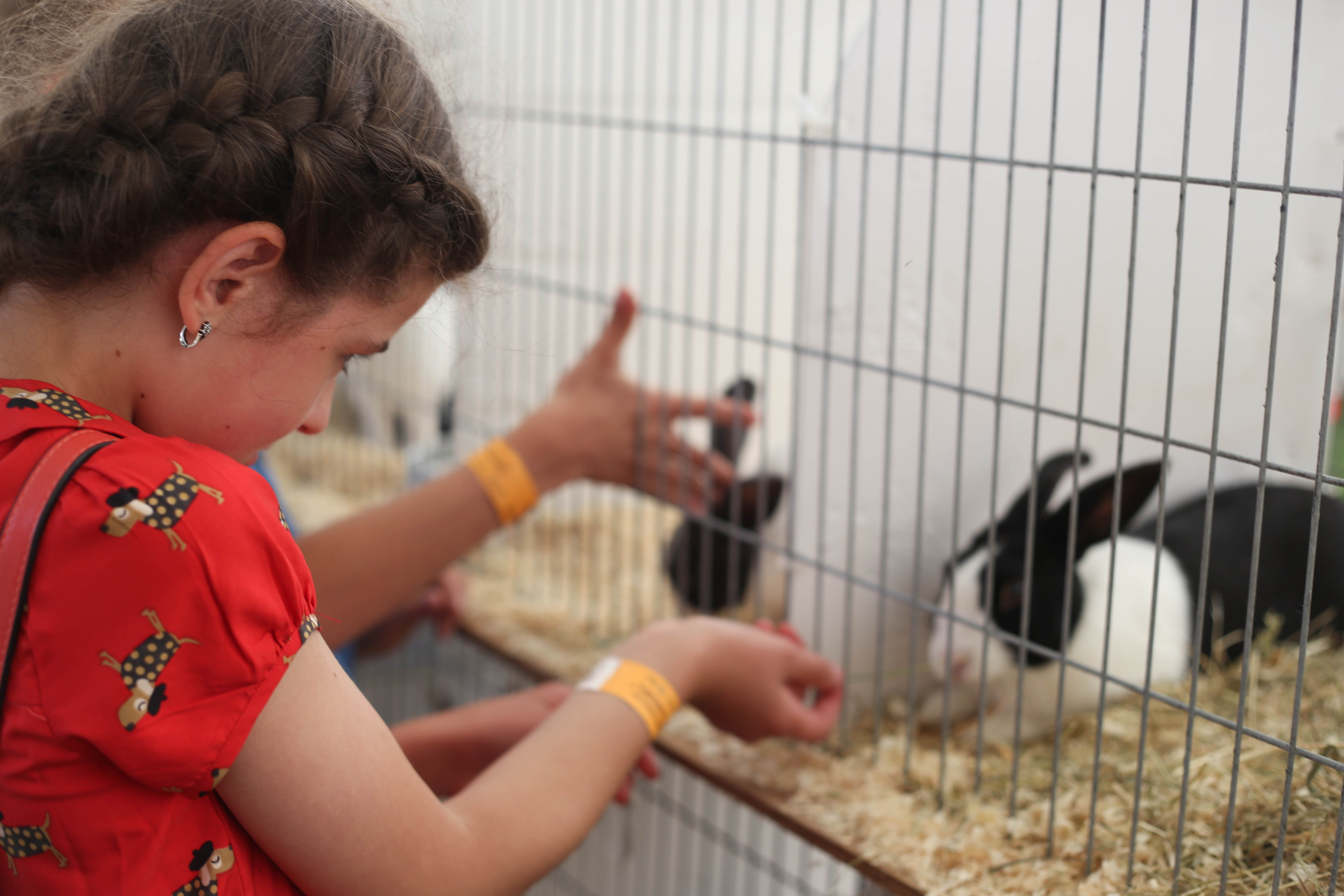 animals for young children at the royal norfolk show