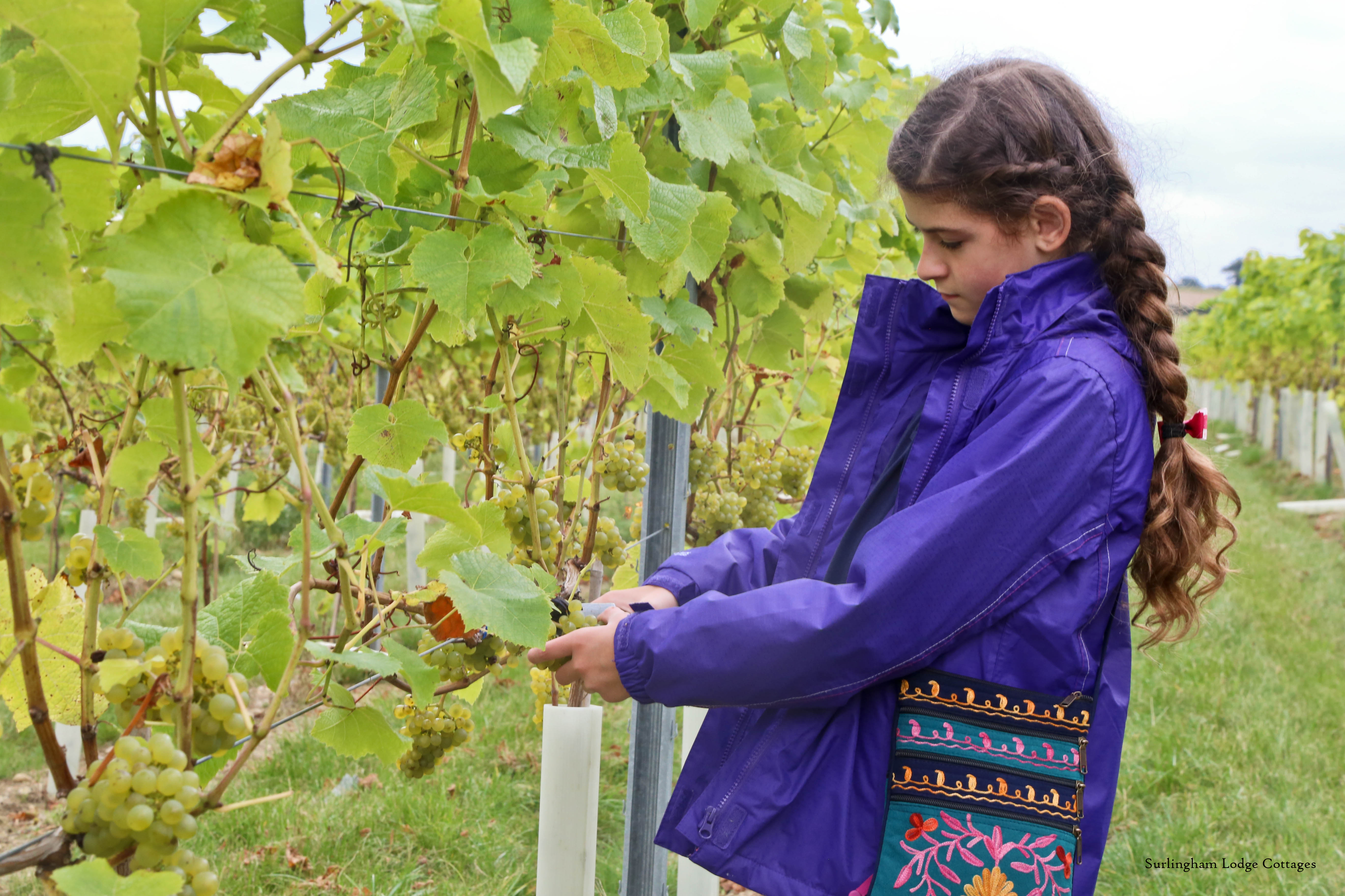 British Vineyards