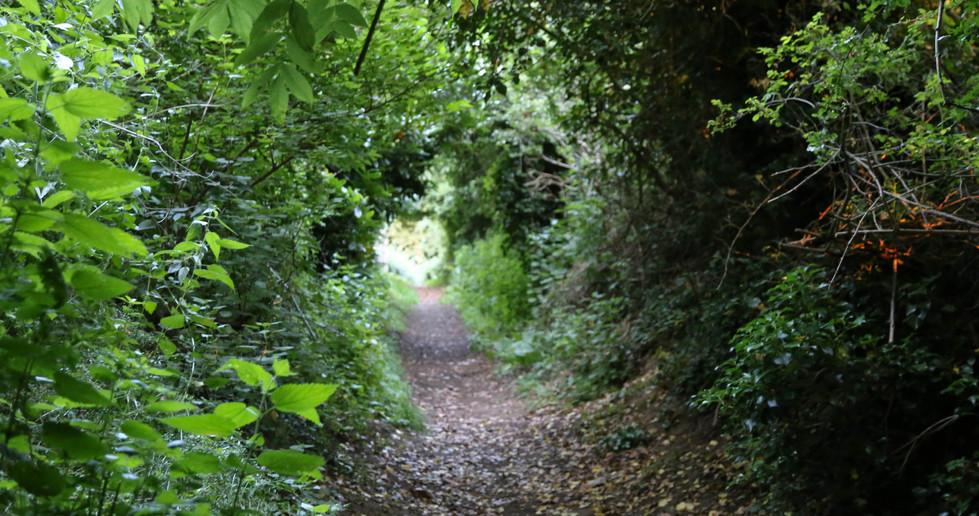 surlingham