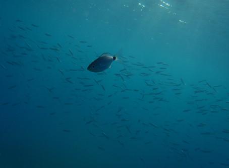 Egy 10 éves Olympus uTough-8010 -el a víz alatt!