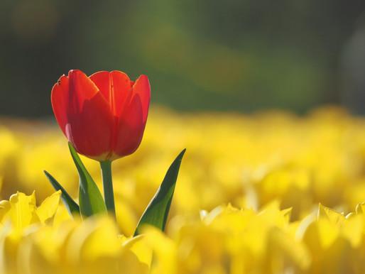Tulipánkert - Éden újratöltve