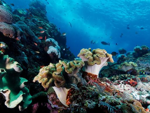 NUSA PENIDA – két óceán határán