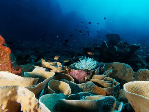Pulau Siau – hívogató messzeség