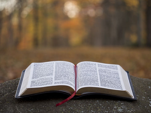 Bible and blurred tree background.jpeg