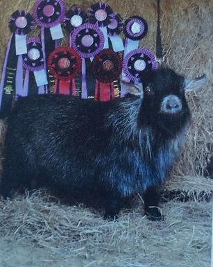 Goose Meadows Preston. tiny cute. quarantine.champion.Trinity