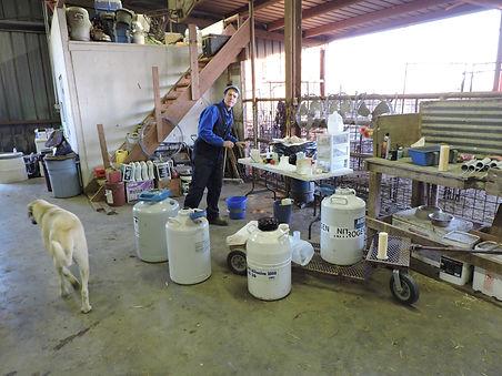 Liquid nitrogen  storage tanks. On farm semen collection.