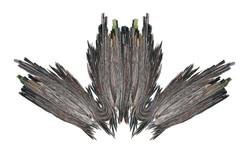 Owl | HQ Scan | 100x160cm