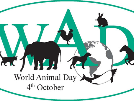 Today is World Animal Day!