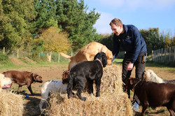 Enrichment time at Doggy Day Care Cornwall
