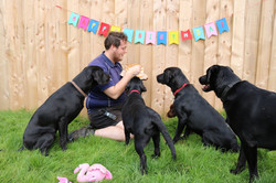 A black lab birthday party at Doggy Day Care Cornwall