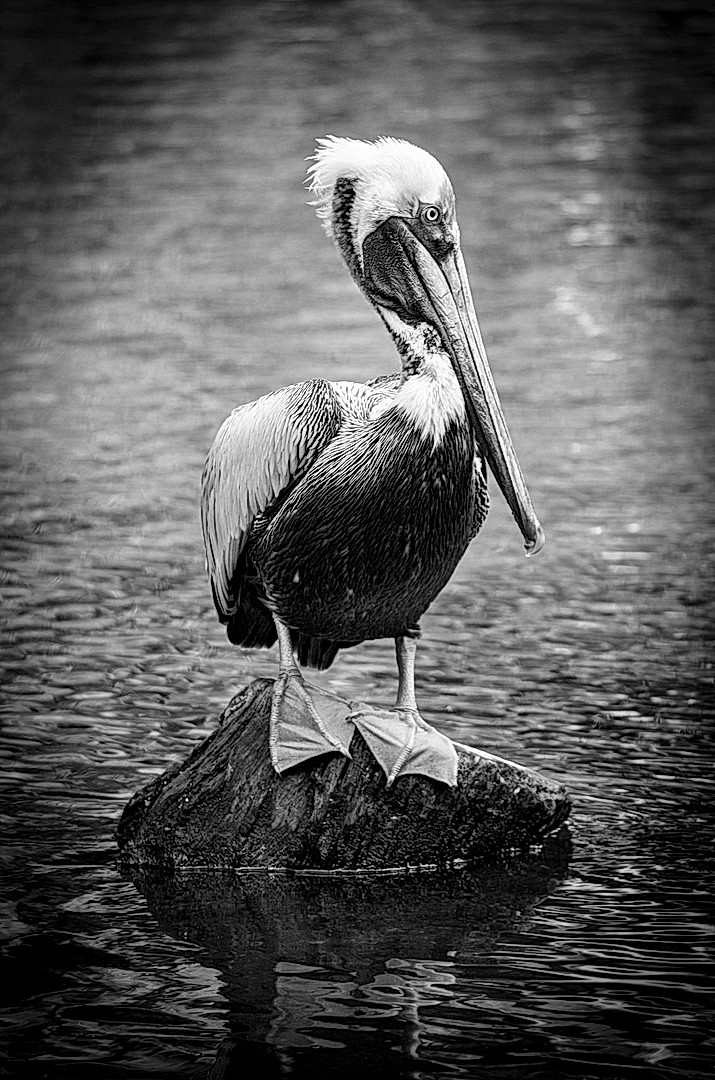 BirdOnRock.jpg