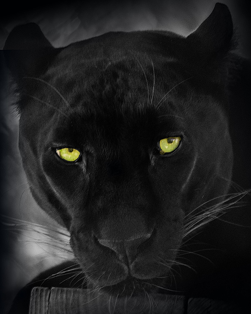 1BlkPanther-bkgd.jpg