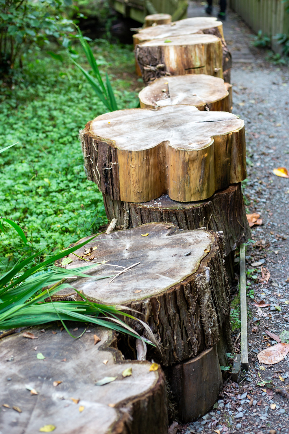 wooden logs in piles