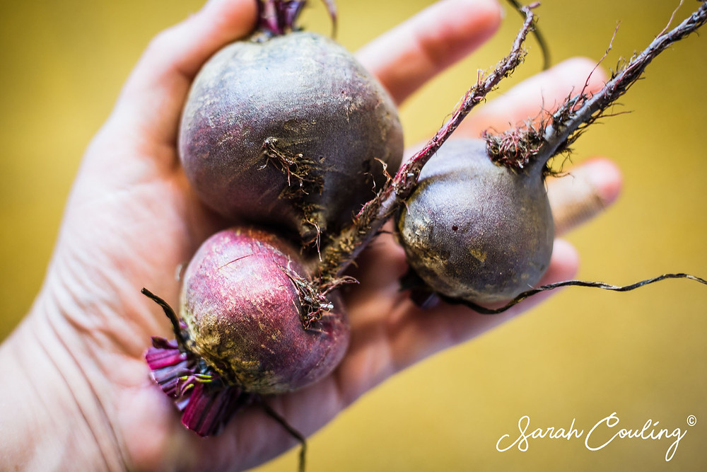 Beetroots in hand