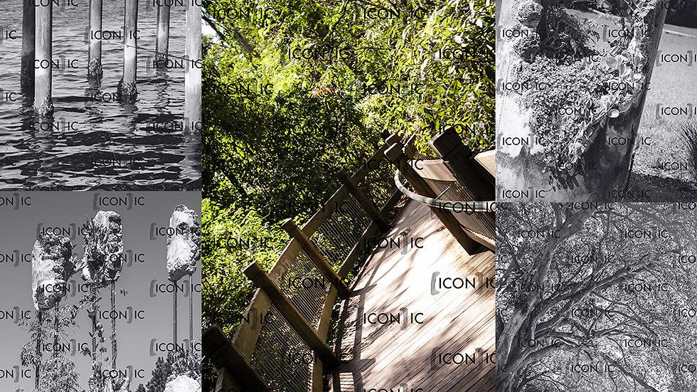PP20 - Nature Scenery