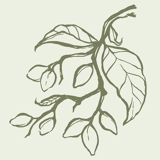 Kakadu Plum Branch