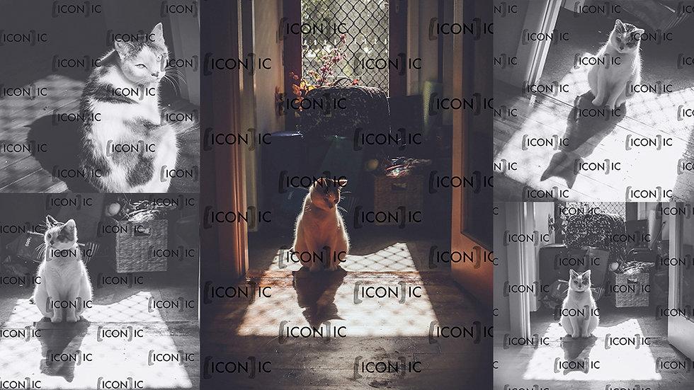 PP25: Cat