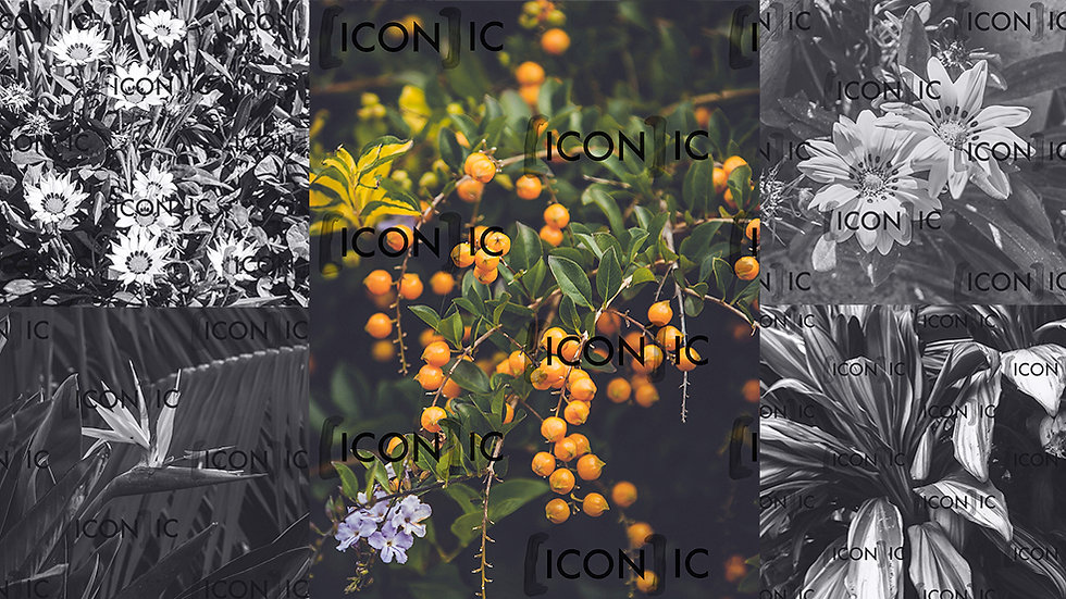PP30: Florals 02