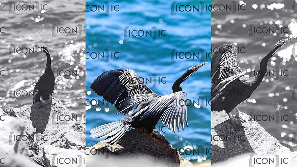 PP9: Water Bird