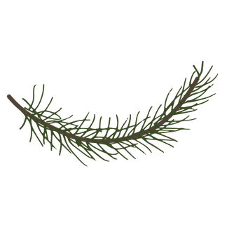 Pine Spruce Branches 6