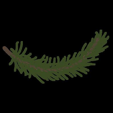 Kiefer Fichte Zweig 6