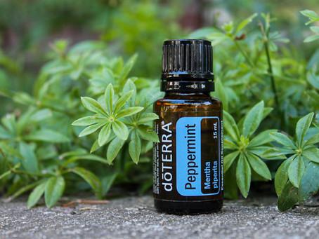 doTERRA Peppermint Oil // Aceite de Menta doTERRA
