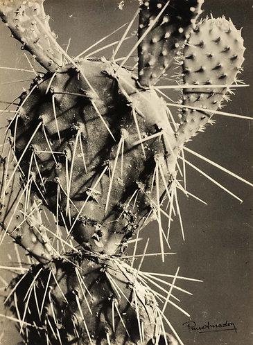"""PIERRE AURADON (1900-1988) – """"CACTUS"""""""