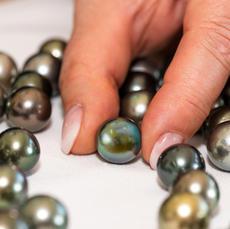 Die Selektion. Die Perle wird aus immer engeren Vorauswahlen ähnlicher Perlen höchster Qualität in Farbe, Form und Größe gemäß ihrer solitären Bestimmung für die Schmuckkreation selektiert.