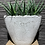 Thumbnail: Aloe in handgemaakte pot